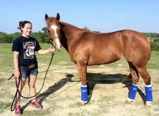 "Janie Stockton's horse ""Crafty"" after Horsepower Herbs treatment: coloc, ulcers, recovery"
